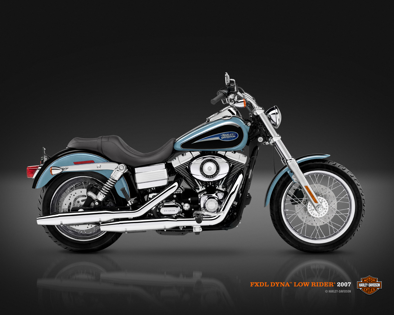 haley rider